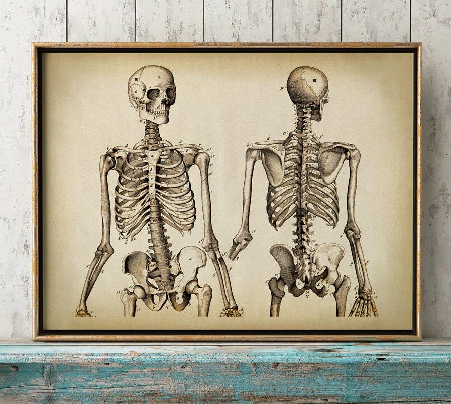 Anatomie Druck Anatomie Poster menschliche Skelett Druck | Etsy
