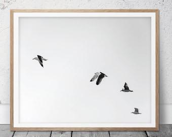 Black and White Photography, Photography, Home Decor, Flying Birds, Bird Prints, Flock of Birds, Fine Art Photography, Black White, FM-119