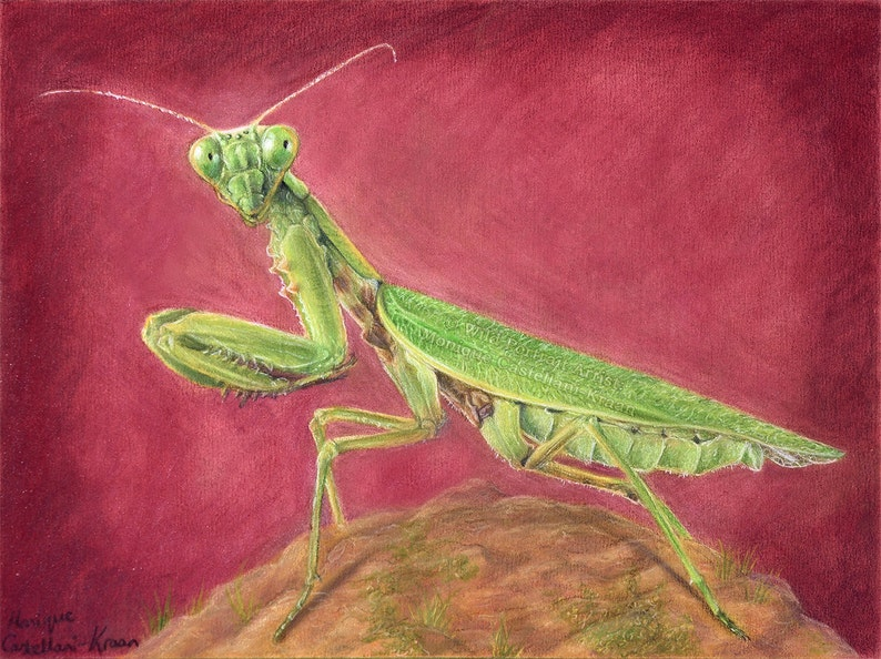The Alien  Original Drawing in Coloured Pencil image 0
