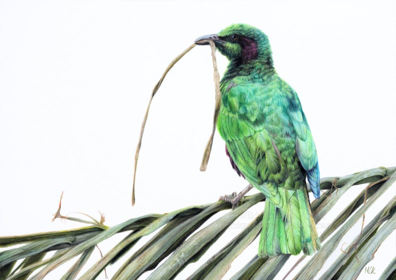 Visitor in Green  Original coloured pencil painting by Wild image 0