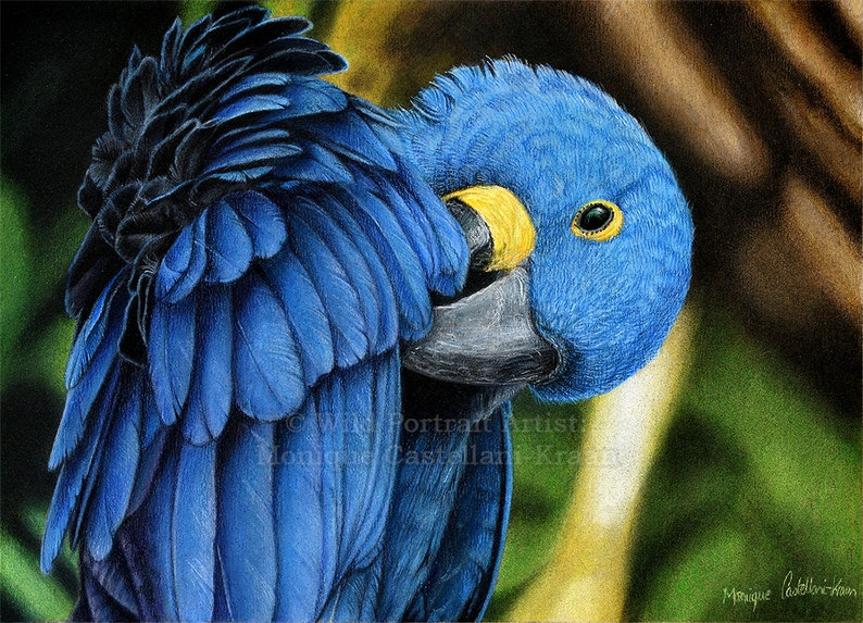 Hyacinth Macaw  Original coloured pencil painting by Wild image 0