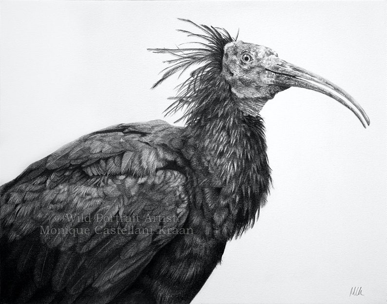 Thoth  Original graphite drawing by Wild Portrait Artist 14 image 0