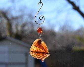 Real Orange Butterfly Wing Suncatcher