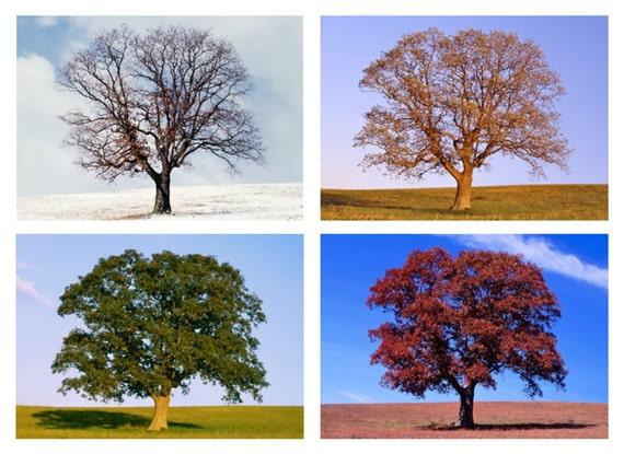 Tree in 4 Seasons Four Seasons...