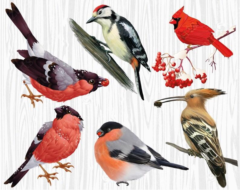 Ptaki Clipart Gil Dzięcioł Ptak Zimowy Ptak Na Oddział Etsy