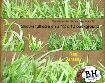 Grass - Digital Scrapbook Element Pack for Personal or Commercial Use