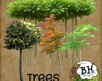 Trees - Digital Scrabook Element Pack for Personal or Commercial Use