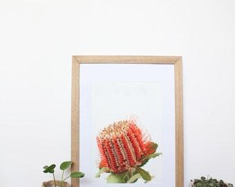 Floral Banksia Framed Print - Australian Native Flora Fine Art Botanical Print