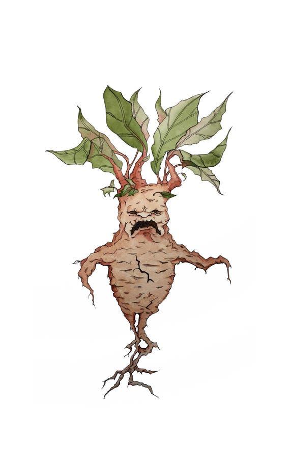 Harry Potter Mandrake Watercolor Art Illustration Print Etsy