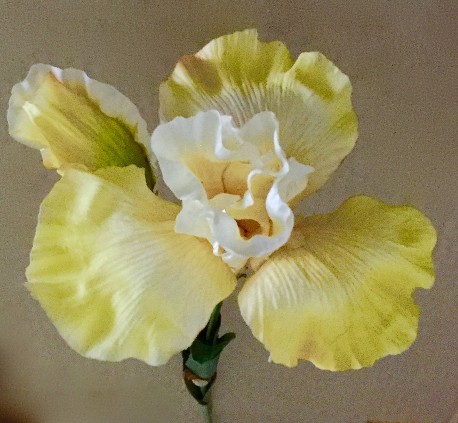 Three 34 Golden Yellow Silk Iris Flowers With One Etsy