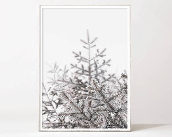 Pine Photo Evergreen Photo Forest Photo Nature Photo Print Winter Photography Downloadable Prints Instant Download Printable Wall Art Poster