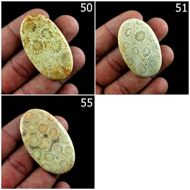Super Quality Natural Fossil Coral Cabochon Loose Gemstone