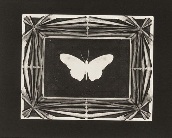 Butterfly Photogram - White Image on Black Background