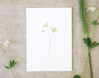 Postcard buttercup, garden, floral greeting card