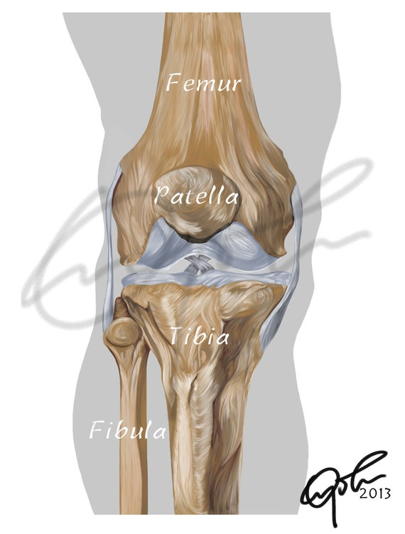 Bones of the knee joint Printable Download Sports medicine   Etsy