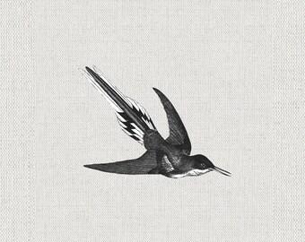 Bird Illustration, Digital Download Printable, Image For Wall Decoration, Prints