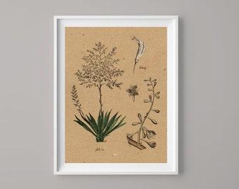 Botany Illustrations, Digital Download,Botany Drawings, Printable Art, Wall decor, Botany, Download Image For Wall Decoration, Prints