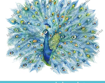 Clip art peacock clipartfest - Cliparting.com