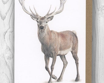 """Notecard - """"Dudley"""" the stag"""