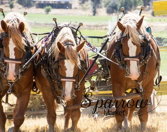 Draft Horses, Country Photography, Horses, Horse Drawn Equipment, Horse Photography