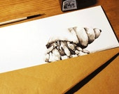 Hand-drawn hermit crab gr...