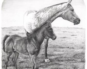 """8.5x11"""" OR 11x17"""" Print of Mother Horse and Colt"""