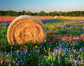 "Texas Wildflower Photo   ""Hay Bales & Wildflowers""   Texas Flowers Wall Art   Texas Landscape - Bluebonnet Field - Texas Hay Bales Decor"