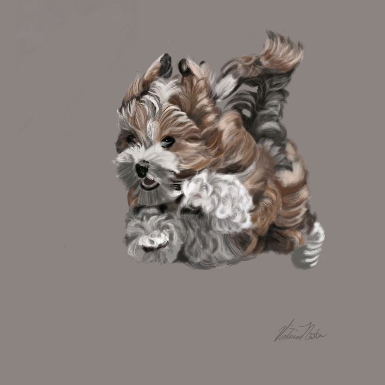 Havanese Dog on the Run Fine Art Print