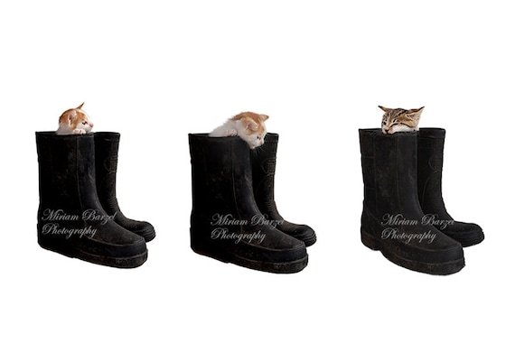 Photography Backgrounds Digital cat, Animal Overlays Transparent PNG 3x cats in boots