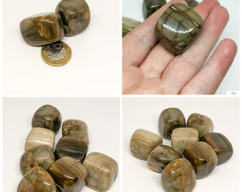 Large Petrified Wood  Tumblestone Crystal for Chakra healing Reiki - one piece