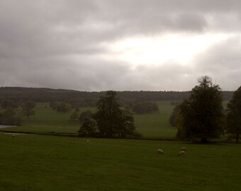 Countryside in Devonshire, England