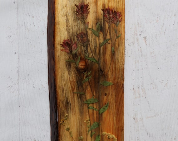 Live Edge Wildflower Art! Real Indian Paintbrush Wildflowers from Idaho on live edge pine wood to hang on your wall. Country Chic