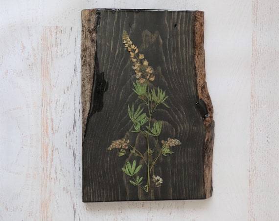 Botanical Wildflower Art! Real Lupine Wildflowers from Idaho on live edge pine wood to hang on your wall. Country Chic look for your home.
