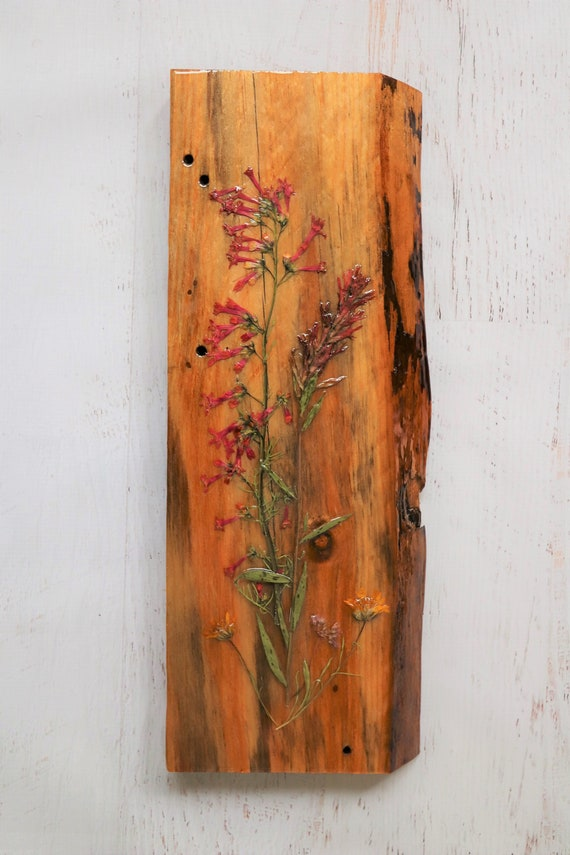 Live Edge Botanical Wildflower Art! Real Wildflowers from Idaho on live edge pine wood to hang on your wall. Country Chic