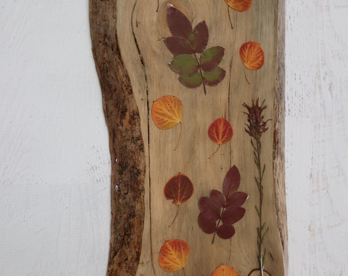 Holly and Aspen Fall Foliage Wildflower Epoxy Resin Art! Real Leaves from Idaho on live edge pine wood to hang on your wall. Country Chic