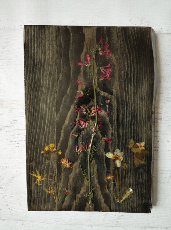 Wildflower Art! Real Wildflowers from Idaho on live edge pine wood, sealed with resin to hang on your wall. Scarlet Gilia flowers.