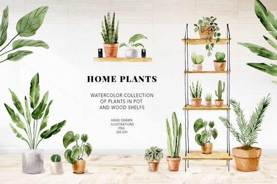 Plant painting, House plants clipart. Boho watercolor plants and cactuses