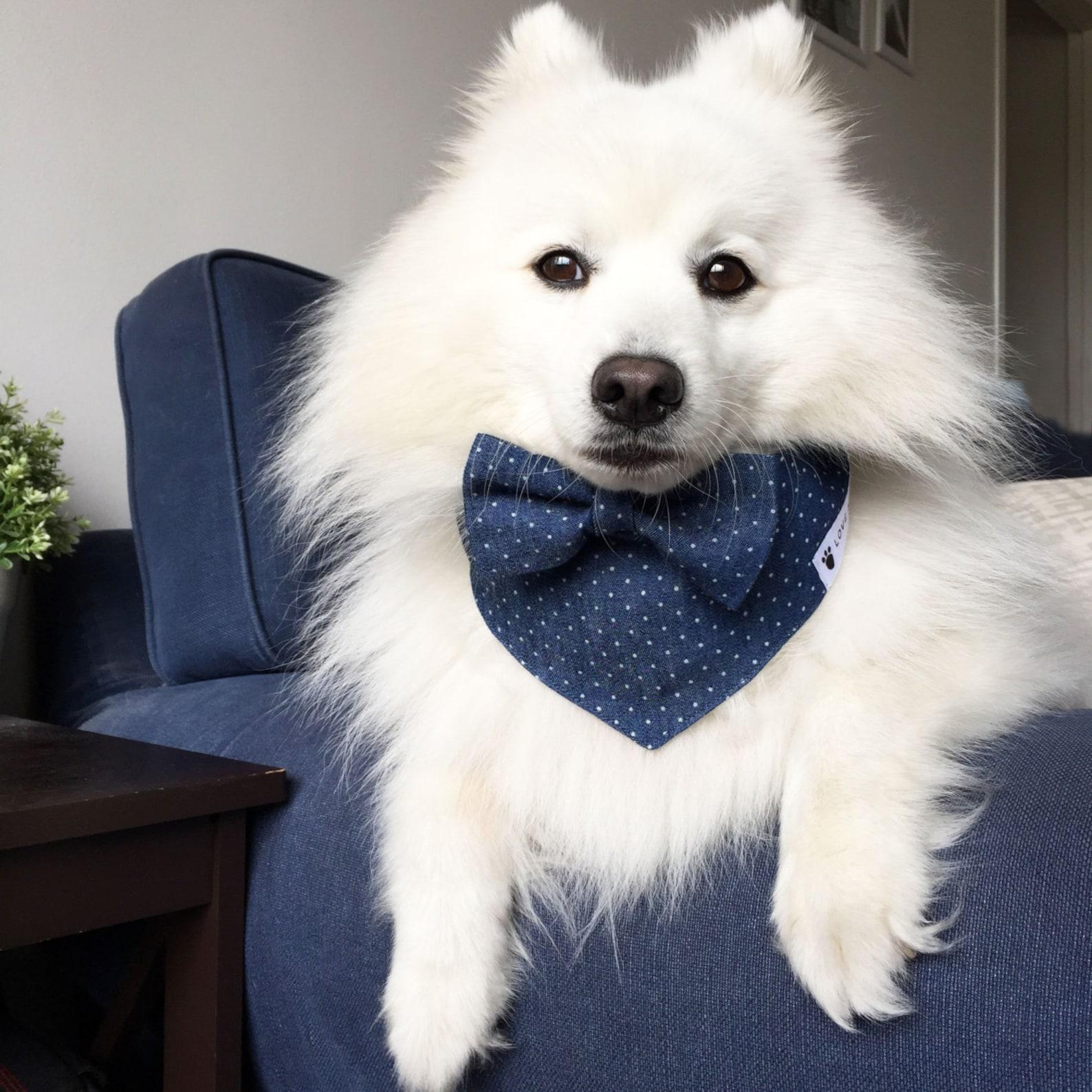 Dog wearing matching bow tie and bandana