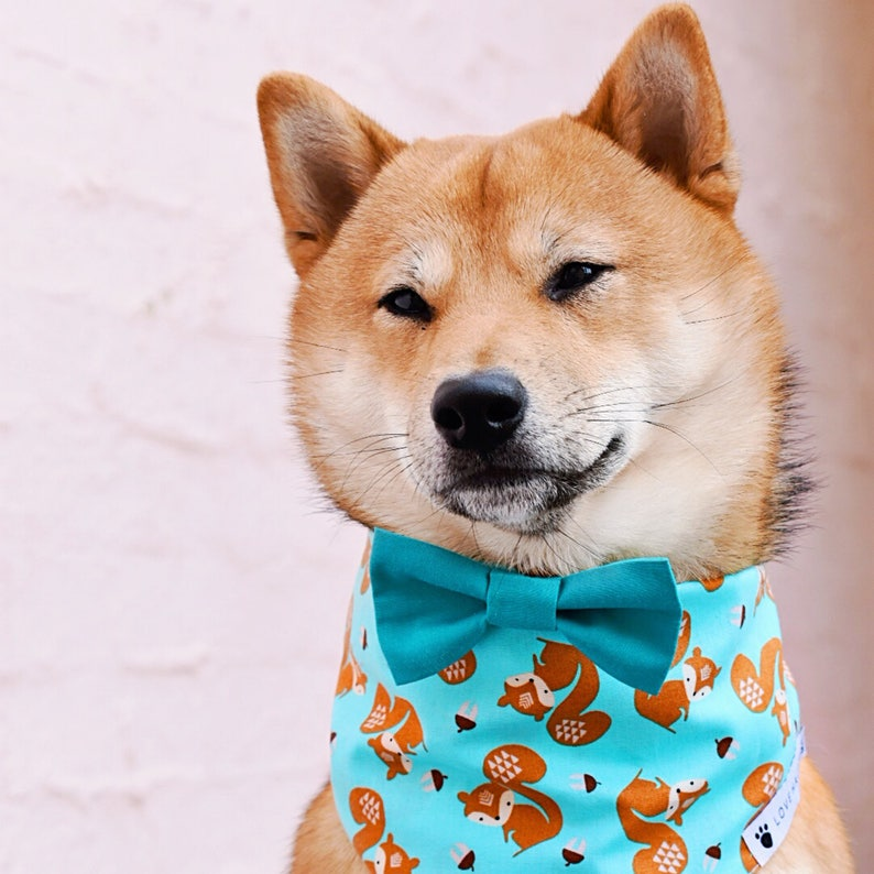 Squirrel Aqua Bow Tie Dog Bandana with Bow Tie image 0