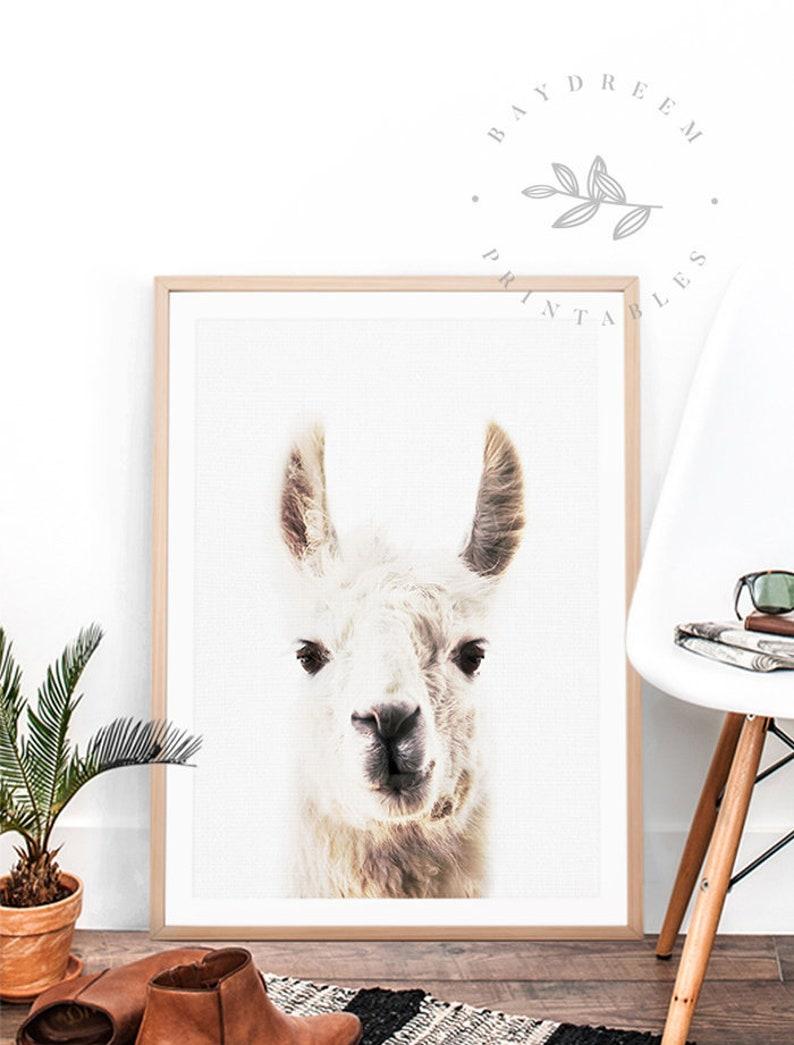 graphic relating to Etsy Printable Wall Art identified as Llama Wall Artwork, Llama Wall Decor, Llama Nursery Print, Llama Wall Print, Llama Print Llama Printable Llama Obtain Llama Printable Wall Artwork