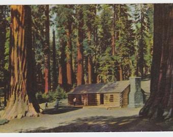 Mariposa Grove Yosemite National Park Postcard California posted 1954
