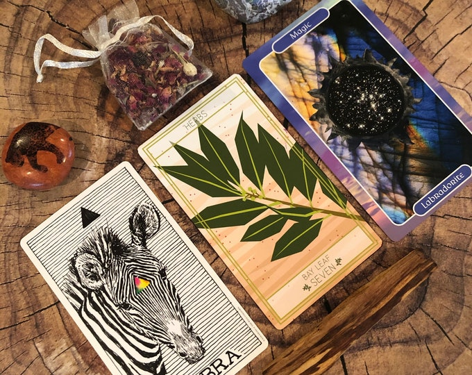 Animal Vegetable Mineral Reading