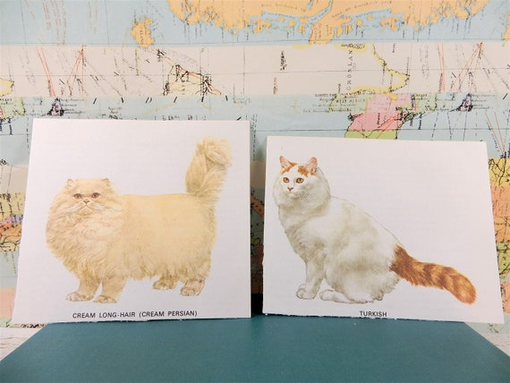 Cat Illustrations Persian Cat Turkish Bred Seal Point Birman Lilac Point Balinese Chocolate Point Balinese