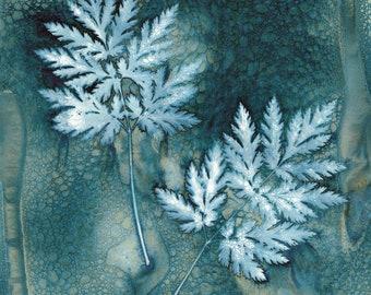 Original Unique Botanical Cyanotype Print of Two Actea racemosa leaves by Jill Welham