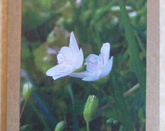 Set of 2 Flower Greeting Cards (Blank)