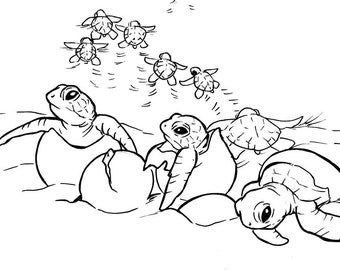 Sea Turtle Coloring Etsy