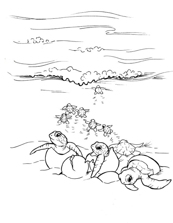 - Sea Turtle Coloring Pages Etsy