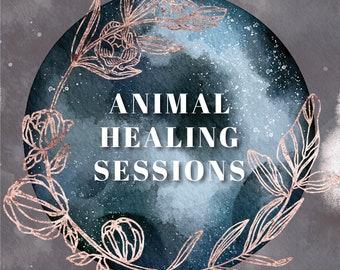 Animal energy Healing, Dog Healing, Cat Healing, Animal Healer, Pet Healer