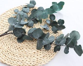 Preserved natural eucalyptus bunch, eucalyptus bouquet, preserved foliage for bohemian decor
