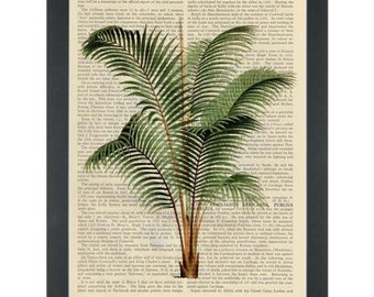 Vintage botanical drawing of green Palm Tree Dictionary Art Print